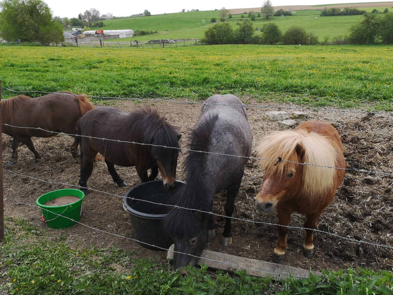 I pony della fattoria